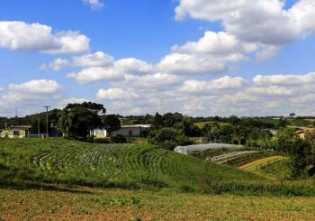 Ludovico Carachenski, agricultor e proprietário do Sítio São Luiz na Colônia Figueiredo em Campo Largo. Campo Largo, 10-04-15. Foto: Arnaldo Alves - ANPr.