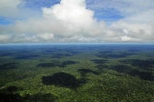 O cadastro vai servir como um banco de dados para controle, monitoramento, planejamento ambiental e econômico e combate ao desmatamento